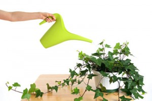 prepare green plants