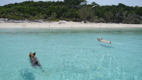 The Caribbean islands with the best beaches – The Travel Masters