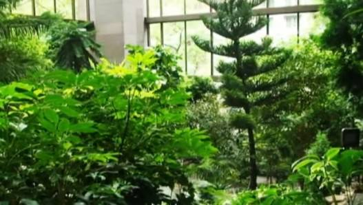 New York: The rainforest secret of Ford Foundation Building