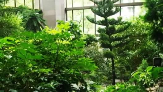 ford fondation building rainforest