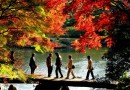 Autumn in Japan: The Momijigari